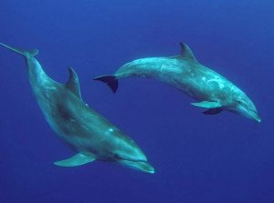 dauphins12